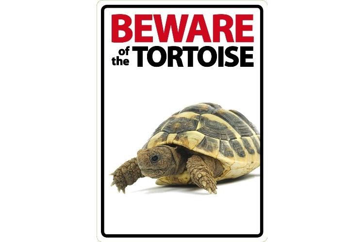 Beware Of The Tortoise Sign Livefood Uk Ltd