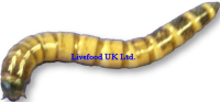 Live Morio Worms  bulk bag 500g