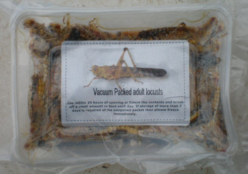 Vacuum Packed Adult Locusts (Reptile Food) 50