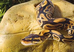 Exo Terra Snake Cave Large Livefood Uk Ltd
